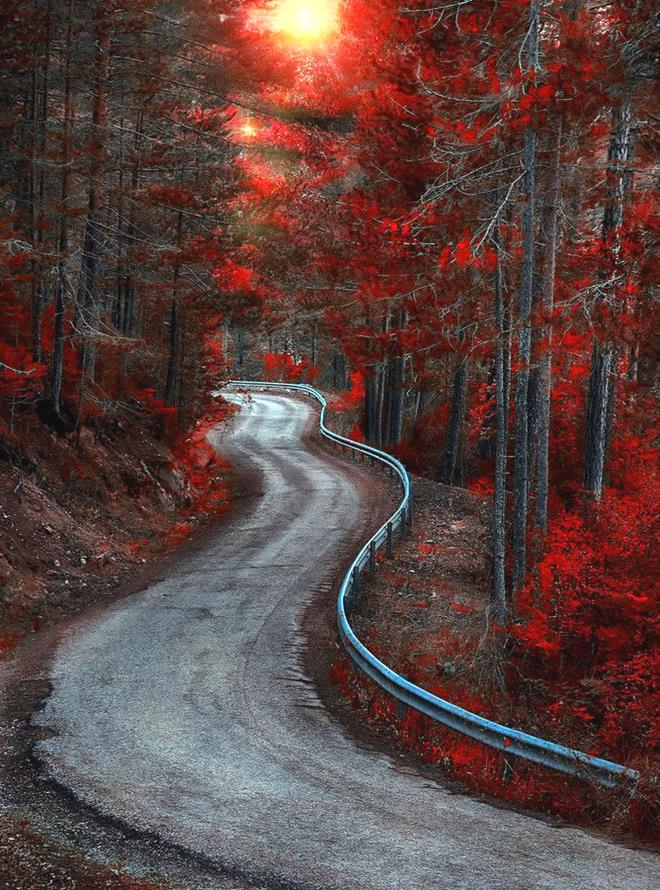 Red Forest by Alfon No15