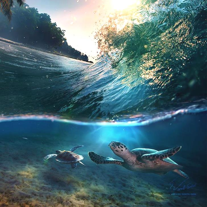 Tropical paradise with turtles by Vitaliy Sokol15