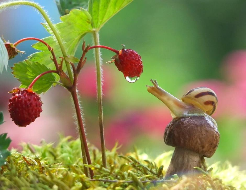 Top 20 magical photos that will change the way you think about snails