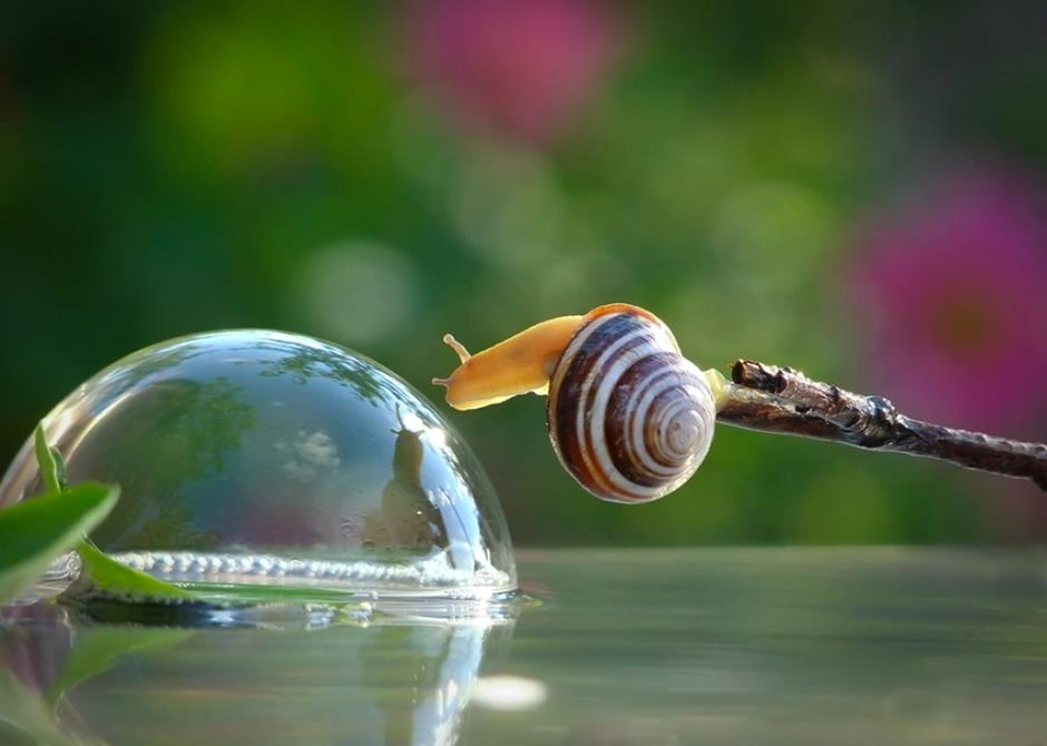 1292-inspirations-photos-snails