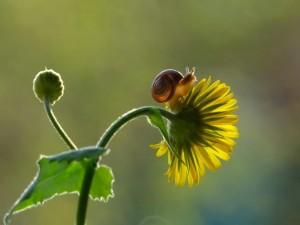 136-inspirations-photos-snails