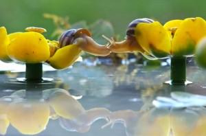 53-inspirations-photos-snails