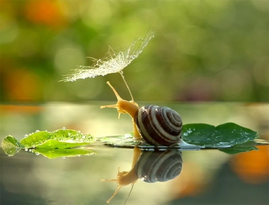 5_n-inspirations-photos-snails