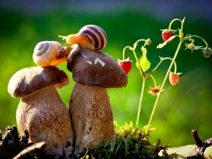 670-inspirations-photos-snails