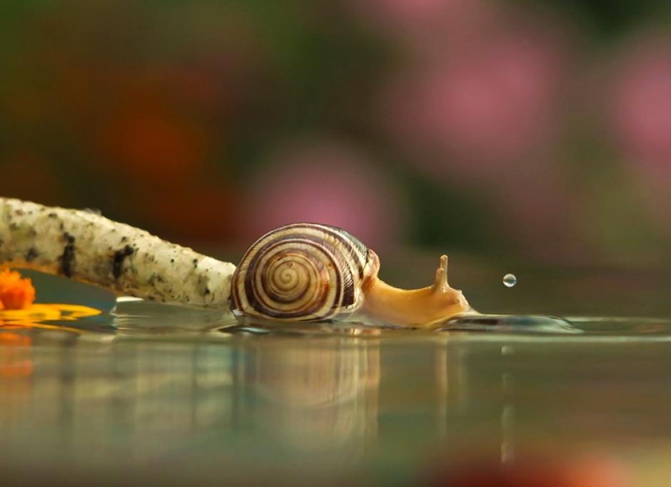 874-inspirations-photos-snails