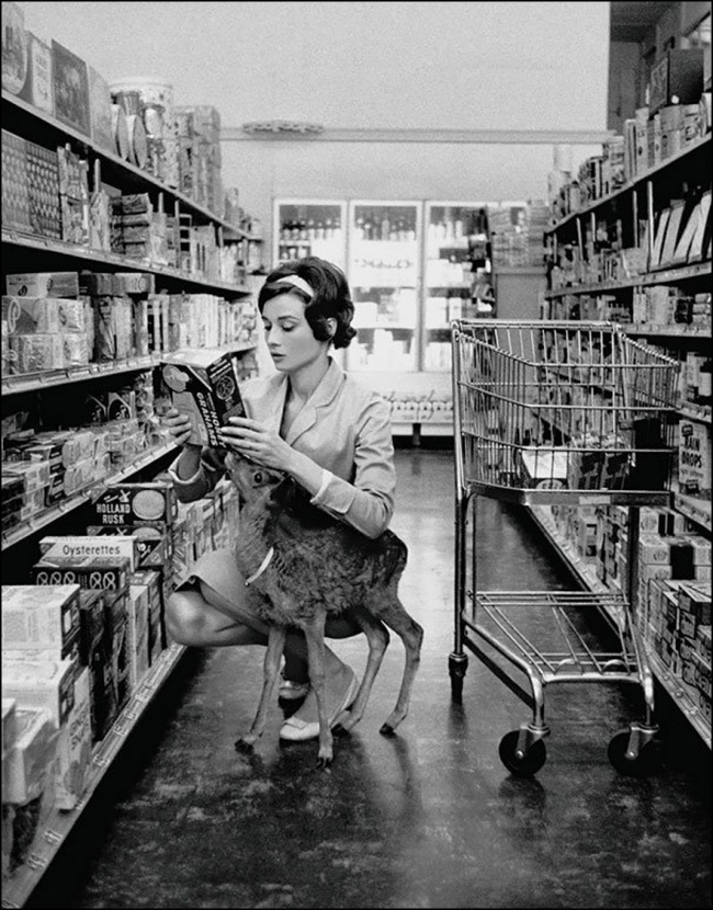 Audrey Hepburn shopping with her fawn, Beverly Hills, 1958