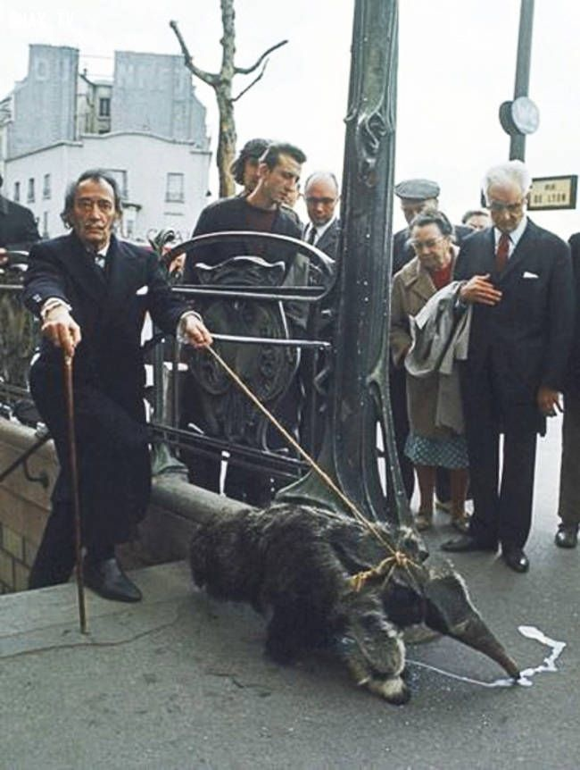 Salvador Dali for a walk with his anteater 1969