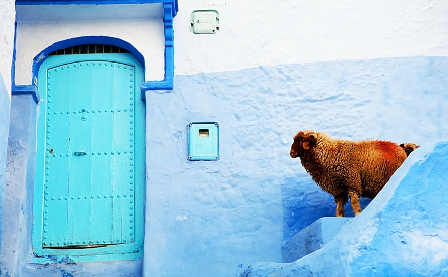 422105-880-1457695400-blue-streets-of-chefchaouen-morocco-8
