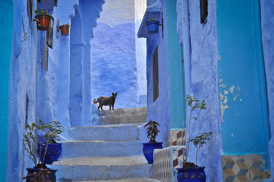 422305-880-1457695400-blue-streets-of-chefchaouen-morocco-3
