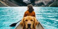 The coolest dog travels with its owner all over the world
